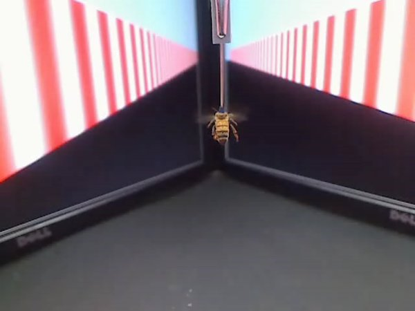 Bee behaviour controlled by the visual flow.