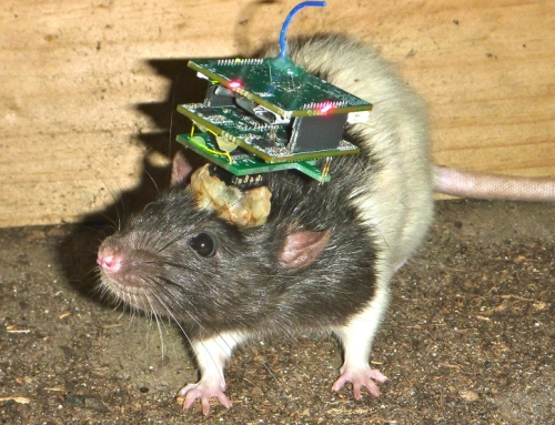 Rodent Scope – A wireless telemetry system for animals