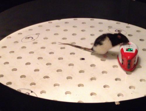 Rat meets iRat